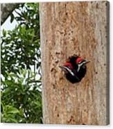 Woodpecker Babies Ready To Explore Canvas Print