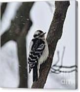 Woodpecker In Winter Canvas Print