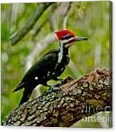 Woodpecker On A Limb Canvas Print