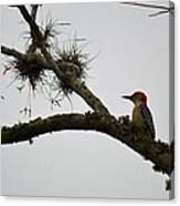 Woodpecker On Lookout Canvas Print