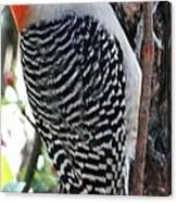 Woodpecker Profile Ll Canvas Print