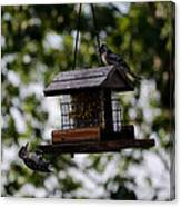 Woodpeckers At Dinner Canvas Print