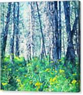 Woods 1 Canvas Print