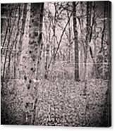 Woods Darkly Canvas Print