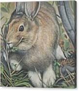 Woods Rabbit Canvas Print