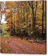 Woods Walk Canvas Print