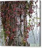 Woodvine Canvas Print