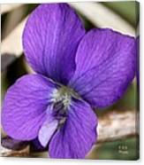 Woody Blue Violet Canvas Print