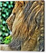 Woolly Mane Of The King   Canvas Print
