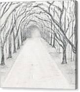 Wormsloe Canvas Print