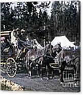 Wylie Coach Yellowstone National Park Canvas Print