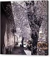 Wynwood Treet Shadow Canvas Print