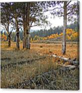 Wyoming Gold Canvas Print