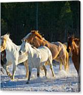 Wyoming Horses Canvas Print