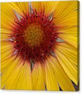 Wyoming Sunflower Canvas Print