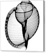 X-ray Of Scotch Bonnet Canvas Print