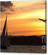 Yacht And Seagull Sunset Canvas Print