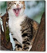 Yawning Cat Canvas Print