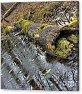 Ye Olde Mossy Log Canvas Print