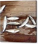 Yea It's Trout For Dinner Canvas Print