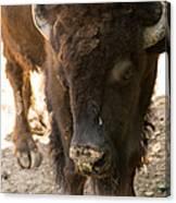 Waco Texas Buffalo Nose Drip Canvas Print