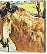 Yeller Horse Canvas Print