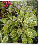 Yellow And Green Bromeliad Canvas Print