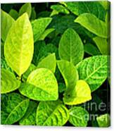 Yellow And Green Leaves Canvas Print