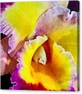 Yellow And Magenta Cattleya Orchid Canvas Print