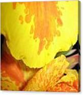 Yellow And Orange Petals Illuminated Canvas Print