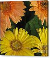 Yellow And Peach Canvas Print