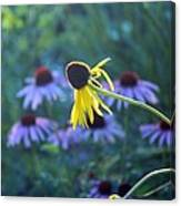 Yellow  And Purple Coneflowers Canvas Print