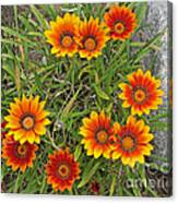 Yellow And Red Daisy Flower Canvas Print