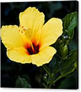 Yellow And Red Hibiscus Canvas Print