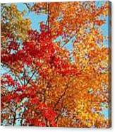 Yellow And Red Canvas Print