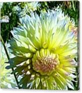 Yellow And White Dahlia Flowers Canvas Print