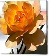 Yellow And White Rose Canvas Print