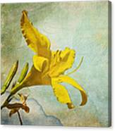 Yellow Asiatic Lilly Iv Canvas Print