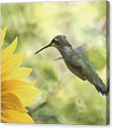 Yellow Attraction Canvas Print