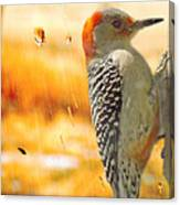 Yellow-bellied Woodpecker Canvas Print