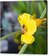 Yellow Bell Flower With Honeybee Canvas Print