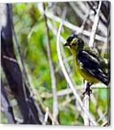 Yellow Bird Canvas Print