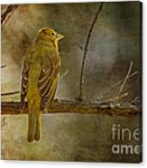 Yellow Bird Resting Canvas Print