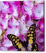 Yellow Black Butterfly On Hydrangea Canvas Print