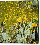 Yellow Blooms Canvas Print