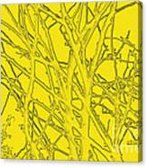 Yellow Branches Canvas Print