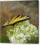 Yellow Butterfly 2 Canvas Print