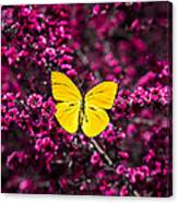 Yellow Butterfly On Red Flowering Bush Canvas Print