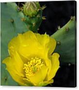 Yellow Cactus Canvas Print