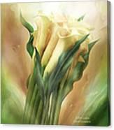 Yellow Callas Canvas Print